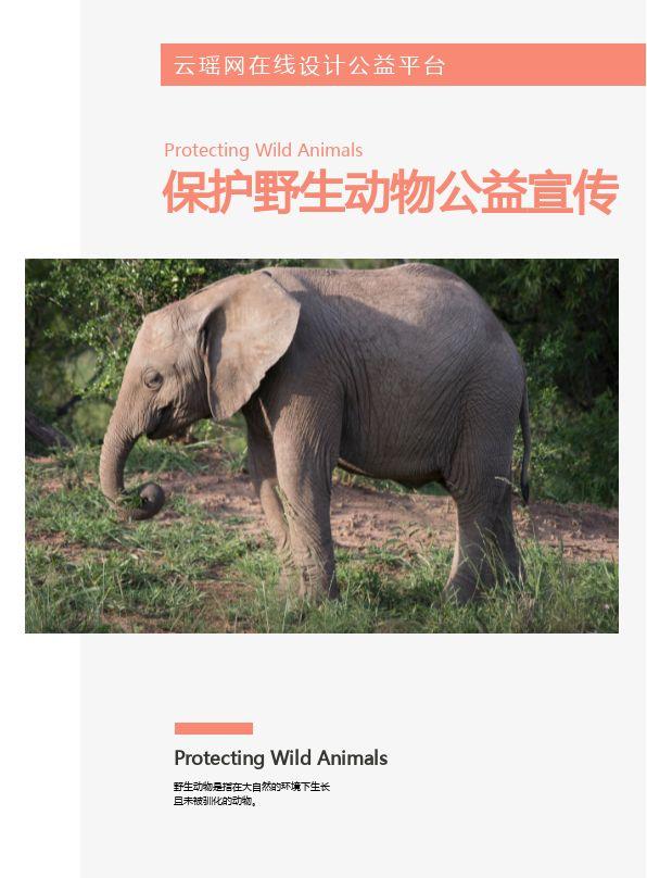 精美保护野生动物公益宣传画册